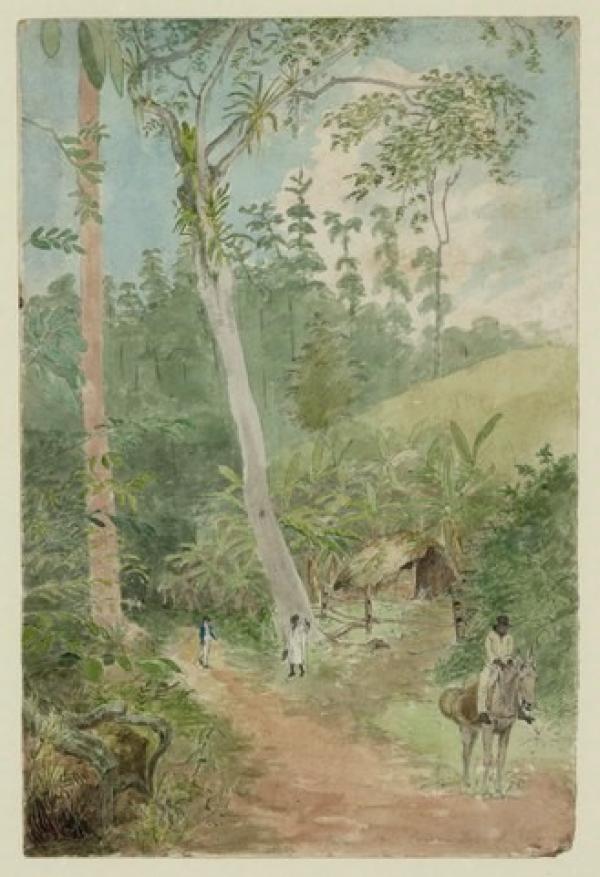 Plantain Walk
